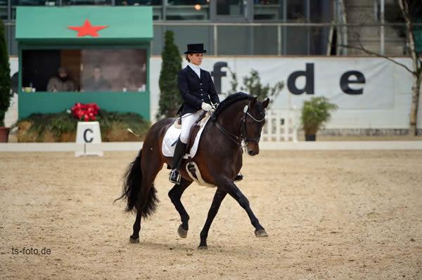 pferd international ergebnisse